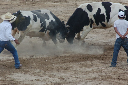 Bullfight in Arequipa por cjette.