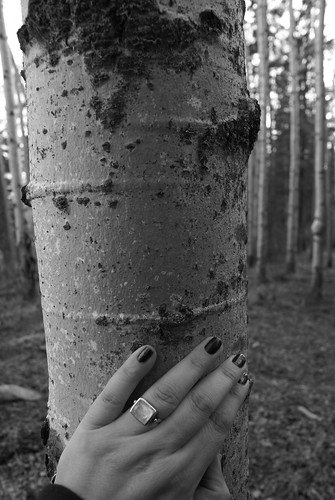 hand on poplar