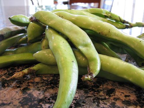 fava beans, hype