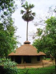 Taldhaj - Harmony with Nature (asis k. chatt) Tags: india westbengal santiniketan naturalharmony internationalgeographic