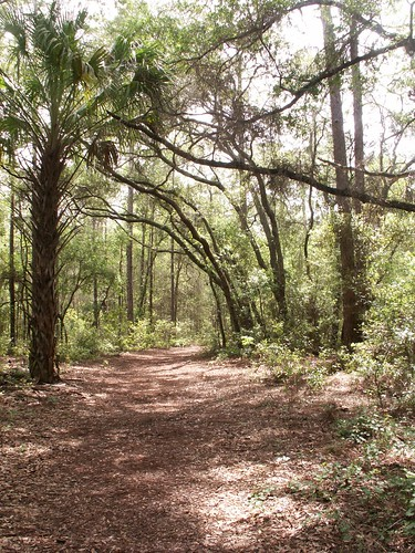 Whispering Pines Park Trail