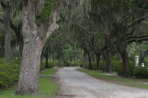 Bonaventure Cemetery, Savannah - Georgia/USA.