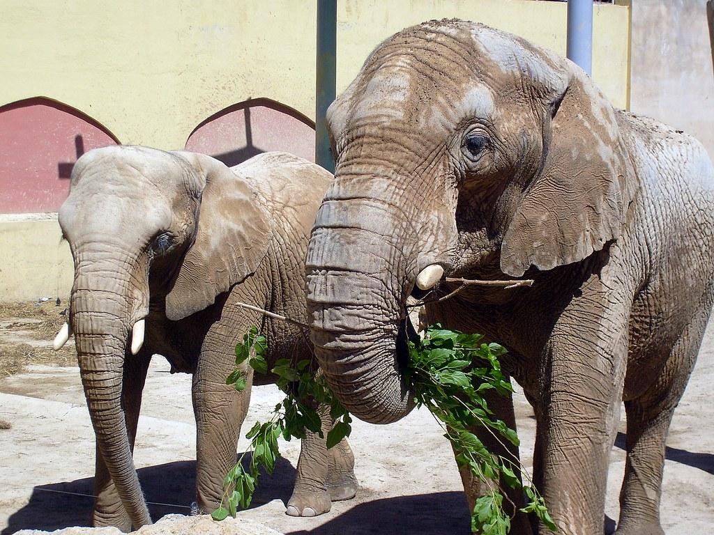 Zoo 21-06-09 038