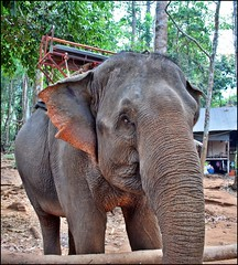 Ko Chang, Thailand (Colin Roohan) Tags: ocean mountains thailand interestingness asia southeastasia all bangkok no or  jungle rights sharing elephants written wat siam without usage reserved watarun permission watpho kowai kochang including allowed copying