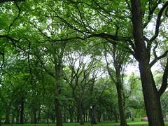 A rainy day in Central Park (Matia M) Tags: nyc newyorkcity trees ny newyork green leaves rain canon interesting mood moody centralpark vibrant dramatic alive canopy lively canonelph canonsd