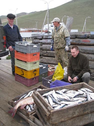 Loads of fish in Lake Baikal