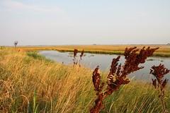 Grass and red shrubs (Robyn Hooz) Tags: venice canon sigma os venezia chioggia sottomarina 18125 hsm aplusphoto 1000d