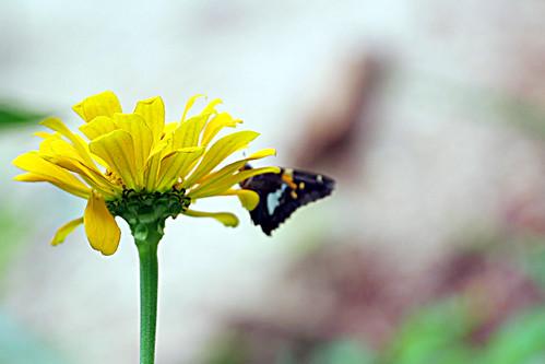 flowerbutterfly3