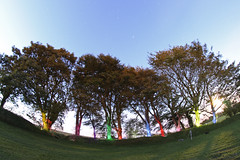 Colours of the trees (LukePhotoFace) Tags: longexposure lightpainting colours wideangle fisheye 65mm opteka torchpainting