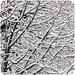 snow . snow . snow [explore] par TanteKäthe