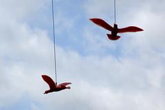 Free as a bird?!? (giansacca) Tags: art birds arte uccelli piemonte oiseaux langhe bergolo