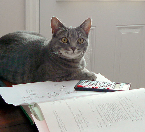PDRater workers compensation calculators - so easy a cat can use them!