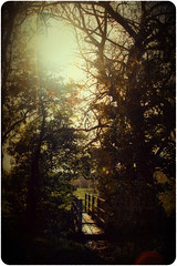 ~*~ (mikepeters) Tags: bridge sun sunlight tree texture leaves rust branch glare flare layer rays vignette