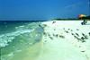 Gulf of Mexco (StephenHB) Tags: film nikon florida f100 communication scanned reality environment temporal velvia50 stjosephstatepark gufofmexico stephenbrooks pleasantstreets pleasantstreetphotography