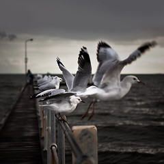 prescribed moments (sadaiche (Peter Franc)) Tags: seagulls pier dusk melbourne stkilda clickthecamera