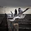 prescribed moments (sadaiche (Peter Franc)) Tags: seagulls pier dusk melbourne stkilda clickthecamera