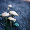 """""""It has long been an axiom of mine that the little things are infinitely the most important."""" (ginnerobot) Tags: blue nature garden mushrooms outside 50mm little bokeh southcarolina ground fungi growing quotations brookgreengardens"""
