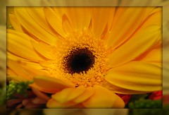 Here Comes The Sun (dart5150) Tags: flower macro yellow bright colorphotoaward happydaysahead theunforgettablepictures