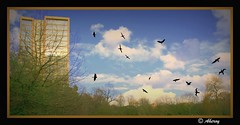 Birds,Groningen stad,the Netherlands,Europe. (Aheroy) Tags: city holland art netherlands dutch birds architecture photomanipulation fun town europe colours different arts nederland surreal hallucination groningen stad beautifull aheroy aheroyal