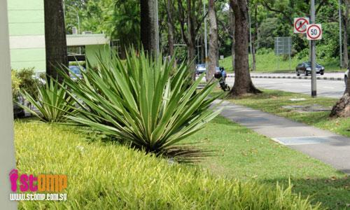 Dangerous plants at polyclinic, says STOMPer