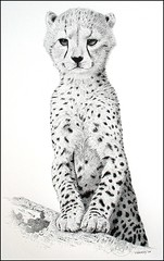 Young Cheetah (pbradyart) Tags: portrait bw art pen ink sketch artwork drawing cheetah pointillism youngcheetah animaldrawing worldofanimals naturewatcher platinumheartaward goldwildlife flickrbigcats bigcatdrawing youngcheetahdrawing cheetahdrawing