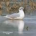 George Gull Photo 7