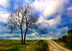 The Survivor on the Hill (Jeff Clow) Tags: road tree nature rural bravo raw texas dfw 1exp sugarridgeroad top20texas bestoftexas bristoltexas