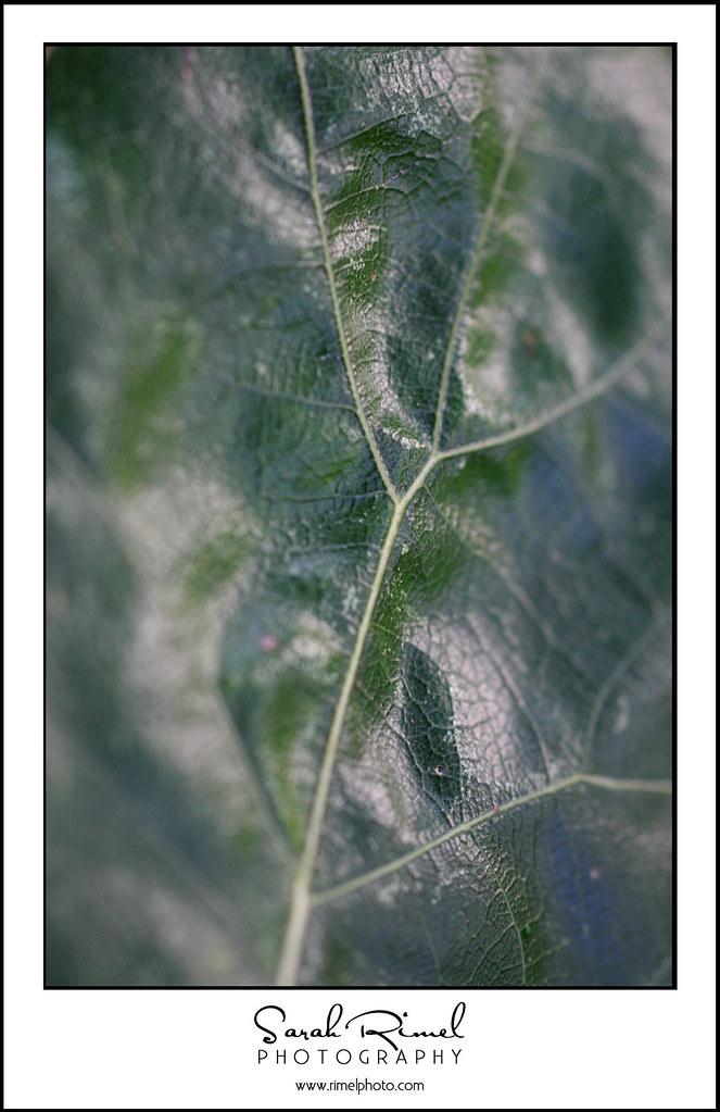 tree 09