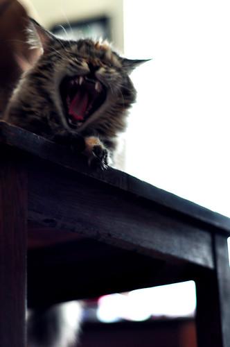 Yawn:  April 26, 2009