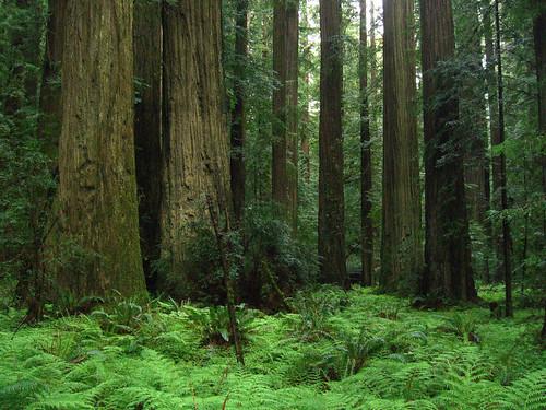 Lush fern groundcover