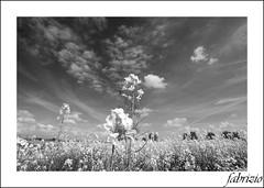 Landscape (fabry ... ) Tags: landscape blackwhite italia fabrizio lombardia bianconero paesaggio fabry nikond200 myland abigfave miaterra circolofotograficopaullese tamaron1118