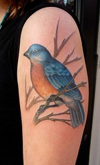 bluebird (ryanmason) Tags: bird portland vegan arm ryan mason tattoos scapegoat attoo ryanmason