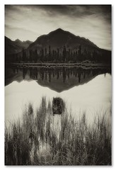 ^0v (mcazadi) Tags: trees sky lake mountains reflection grass clouds blackwhite rocks alberta banff tall