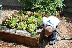 gardening 015.JPG