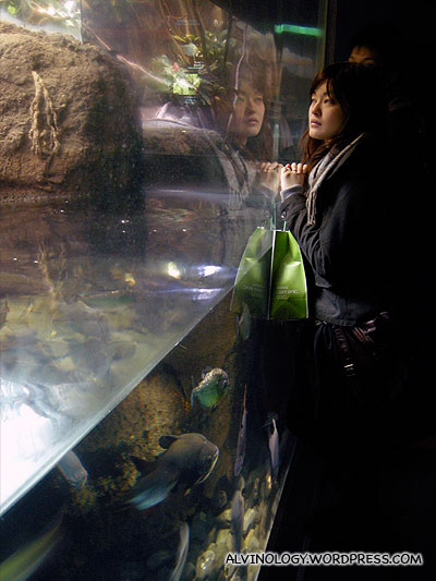 A lady observing the fish