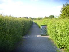 in the garden (glasherz) Tags: garden way hedge garten weg hecke