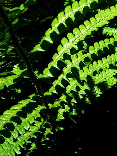 green fern stripes