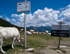 Col d'Aspin (will_cyclist) Tags: france geotagged cows biking coldaspin pyrenees geo:lon=0328388 geo:lat=42942727 cowsx