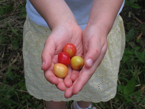 cherry 032