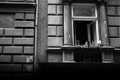 The dark 50's (Olh, Gergely Mt (OGM)) Tags: city bw woman window dark budapest ff nni muffktli
