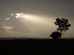 Sunbeams (Mrs Butterbur) Tags: tree silhouette clouds derbyshire sunbeams lonelytree olympusmju unature