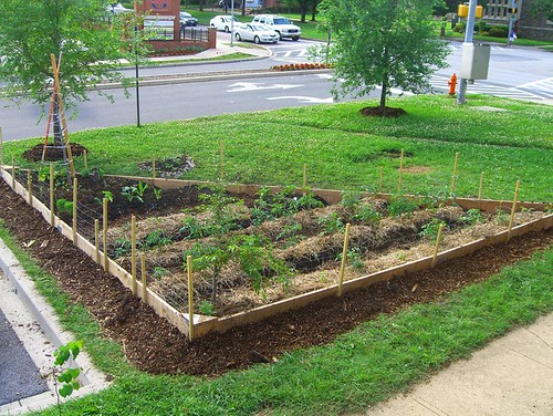 09 06 06 Tinges Commons garden phase 1 completion 16.jpg