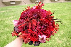 Top of bride's bouquet (Rolland Glass) Tags: flowers red roses orchids callas bouquet dahlias kangaroopaws