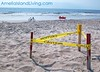 Sea Turtle Nest Amelia Island, Florida