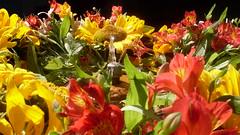 100% COLOR NATURAL (Leonardo Zuleta) Tags: naturaleza flores verde rojo agua colombia natural pueblo fuente amarillo polen naranja girasol pila villadeleyva boyaca astromelia leonardozuleta