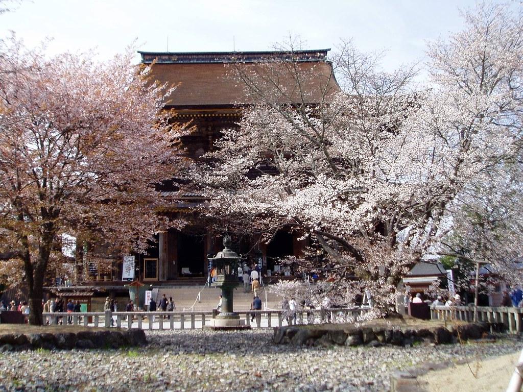 金峯山寺蔵王堂と満開の四本桜