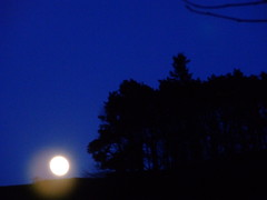 MOONSHADOW GLOAMING. (the water watcher 05.) Tags: borders hawick scotland shadow sky night blue blueazul view landscape trees tree wood twilight gloaming dusk moody hill hills nightsky star stars town village skyline rural countryside moonlight fullmoon haunted spooky dreamy scottishborders moon moonrise woods roxburghshire bluesky risingmoon nature orchardhill hilltop heronhillwood light shadows lightandshadows silhouettes silhouette darkwood black scarywood creepywood hauntedwood sundown