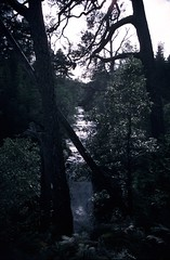 Scotland 18Sep87 Laddie Wood (Wanderlust676) Tags: scotland laddie garry