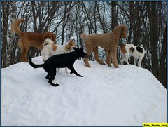 Mia, Buffy, Sonni, Jay, Dougie (Alternative Dog Daycare) Tags: jay doug buffy sonny dogdaycare alternativedogdaycare