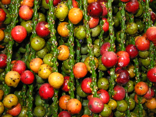 nature seeds colorful balls coconuts red yellow green texture fruits